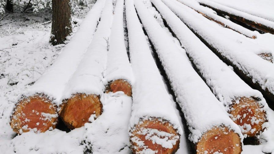 Snowy logs